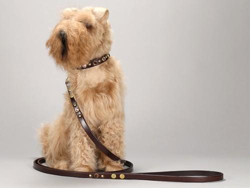 swarovski toy breed leather dog collar 001f